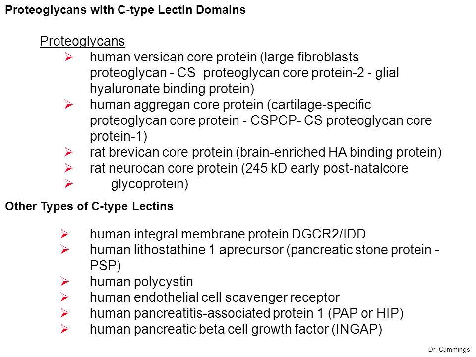 human integral membrane protein DGCR2/IDD human lithostathine 1 aprecursor (pancreatic stone protein - PSP) human polycystin human endothelial cell sc