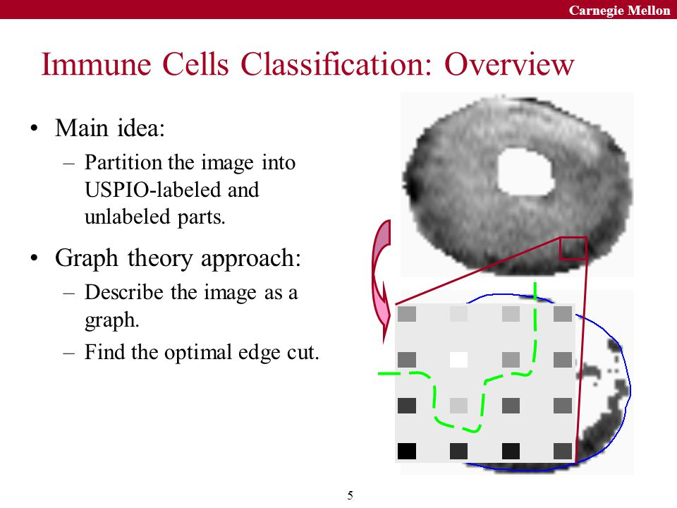 16 Carnegie Mellon Conclusions Develop a graph theoretical approach to classifying immune cells in the USPIO- enhanced images –Represent an image by a graph.