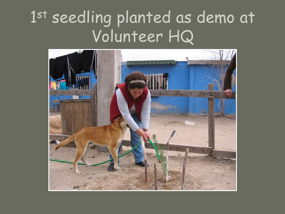1 st seedling planted as demo at Volunteer HQ