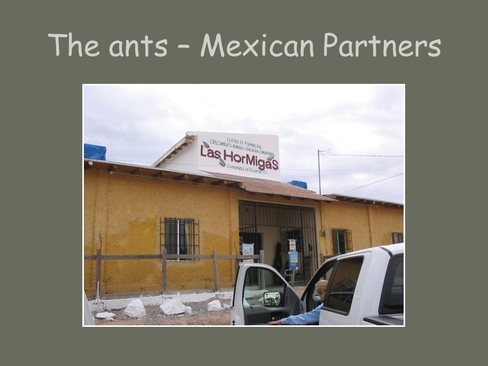 The ants – Mexican Partners
