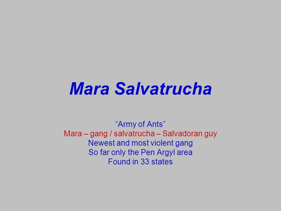 Mara Salvatrucha Birthplace: El Salvador Weapon of choice: machette Assisting terrorists into U.S.