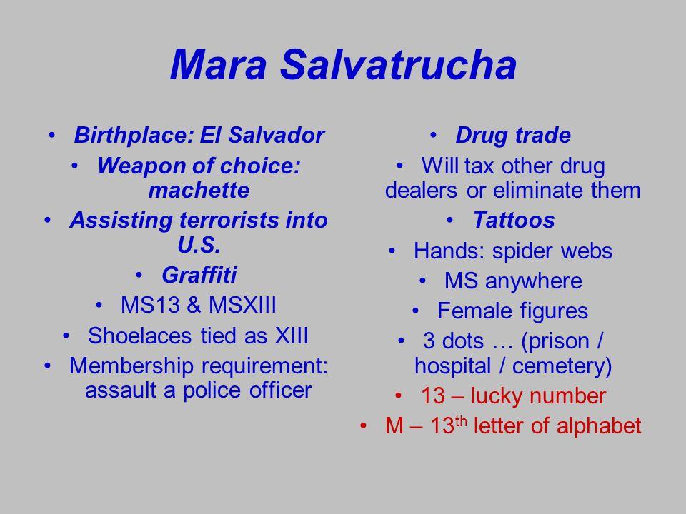 MS - 13 MS – 13 membership: Salvadorians Guatemalans Hondurans Vows: gang / God / family – that order