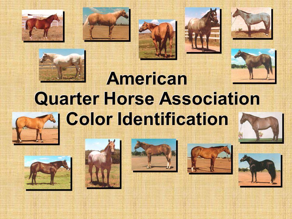 American Quarter Horse Association Color Identification