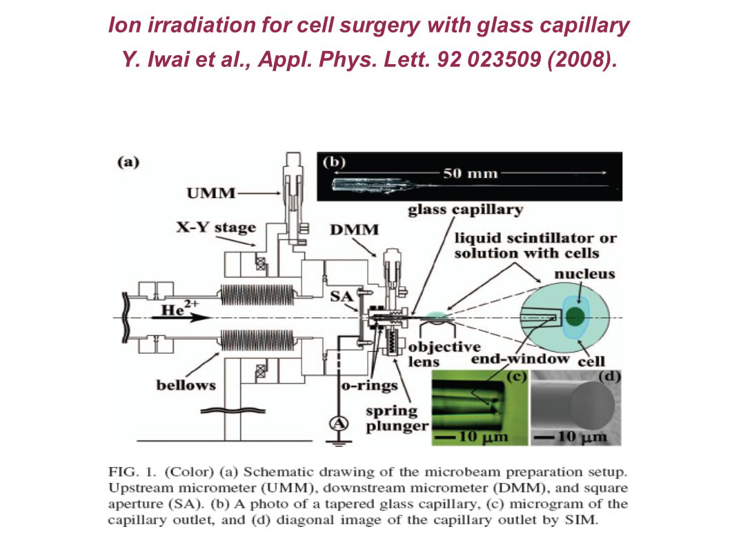 Ion irradiation for cell surgery with glass capillary Y.
