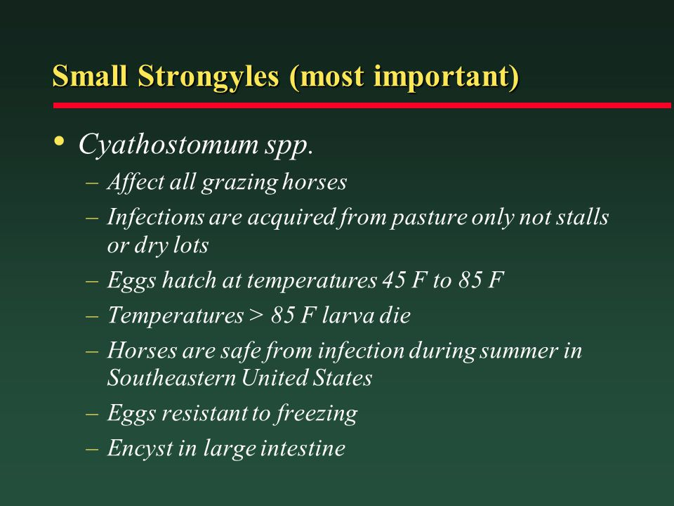 Small Strongyles (most important) Cyathostomum spp. –Affect all grazing horses –Infections are acquired from pasture only not stalls or dry lots –Eggs