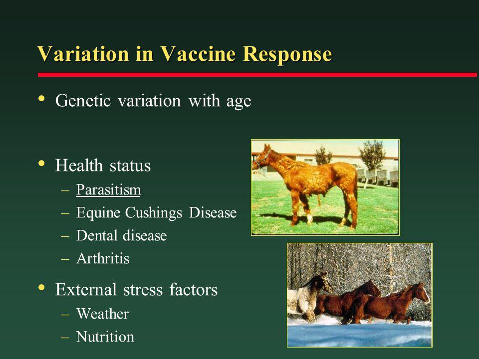 Variation in Vaccine Response Genetic variation with age Health status –Parasitism –Equine Cushings Disease –Dental disease –Arthritis External stress