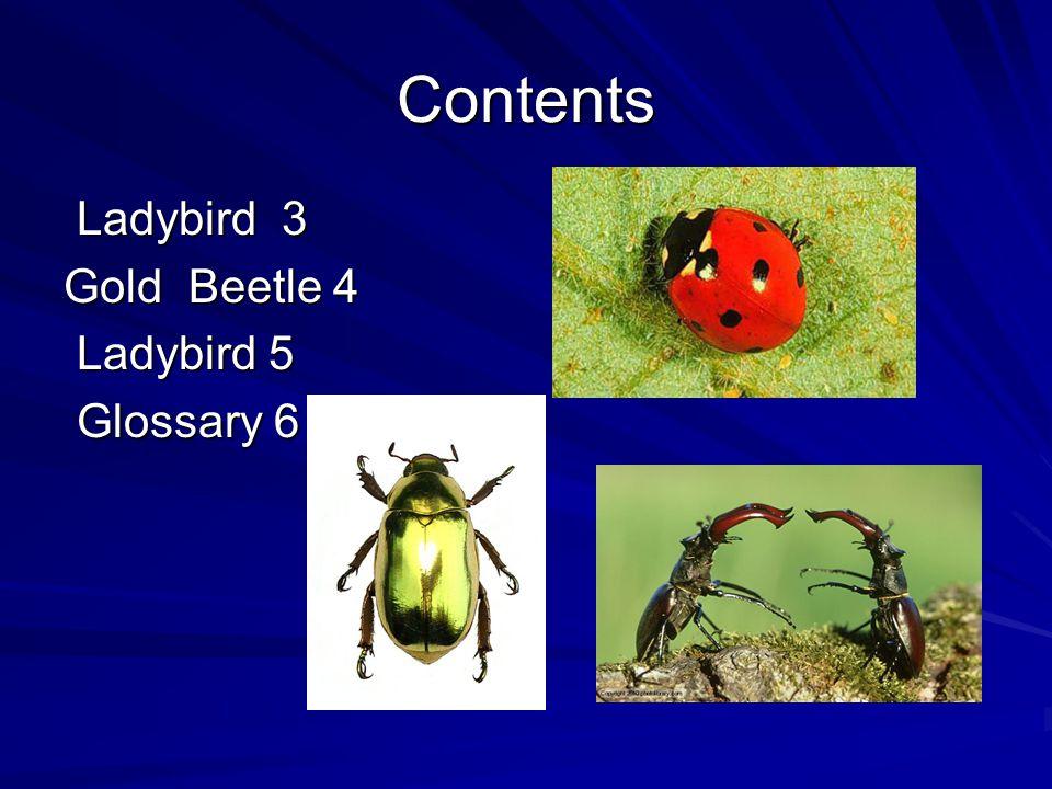 Contents Ladybird 3 Ladybird 3 Gold Beetle 4 Ladybird 5 Ladybird 5 Glossary 6 Glossary 6