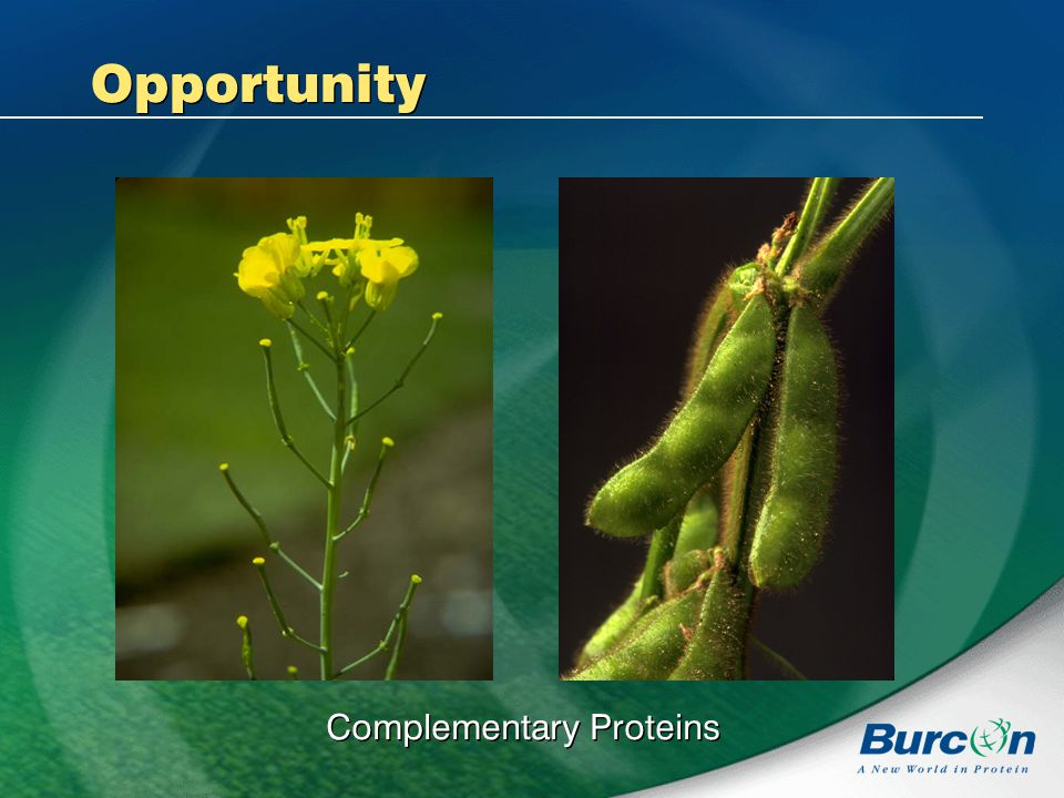 Complementary Proteins Opportunity
