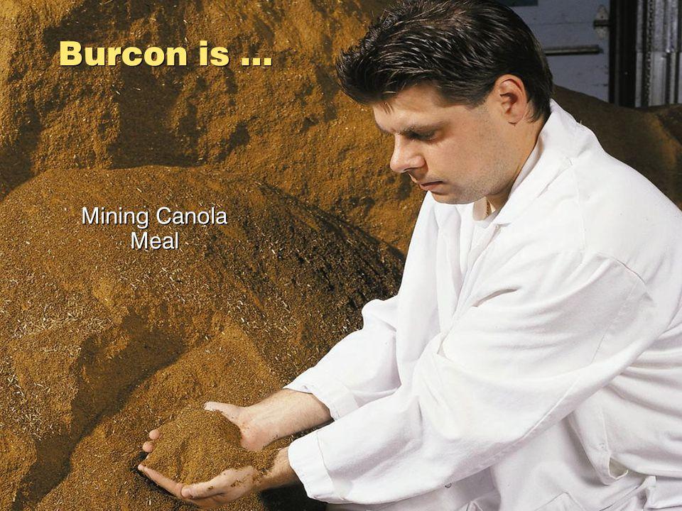 Mining Canola Meal