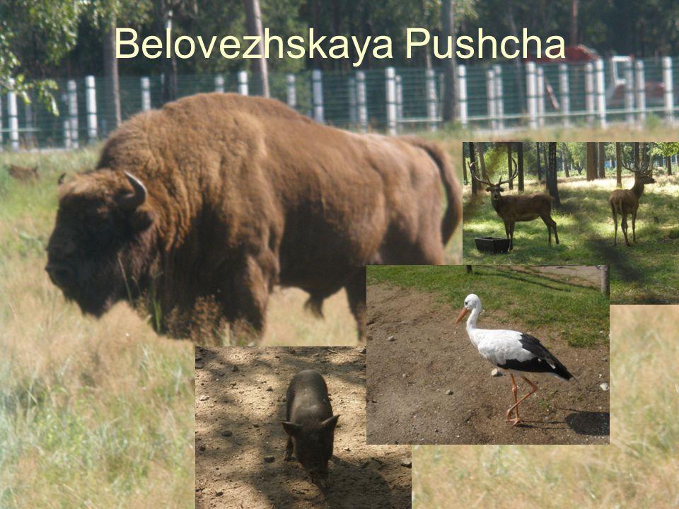 Belovezhskaya Pushcha