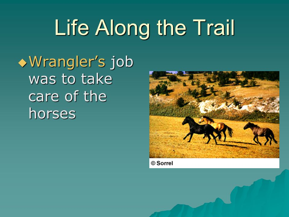 Life Along the Trail Wranglers job was to take care of the horses Wranglers job was to take care of the horses