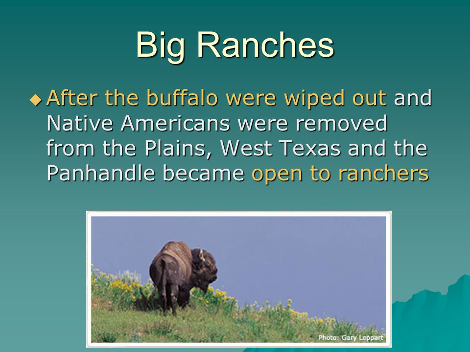 Big Ranches After the buffalo were wiped out and Native Americans were removed from the Plains, West Texas and the Panhandle became open to ranchers A