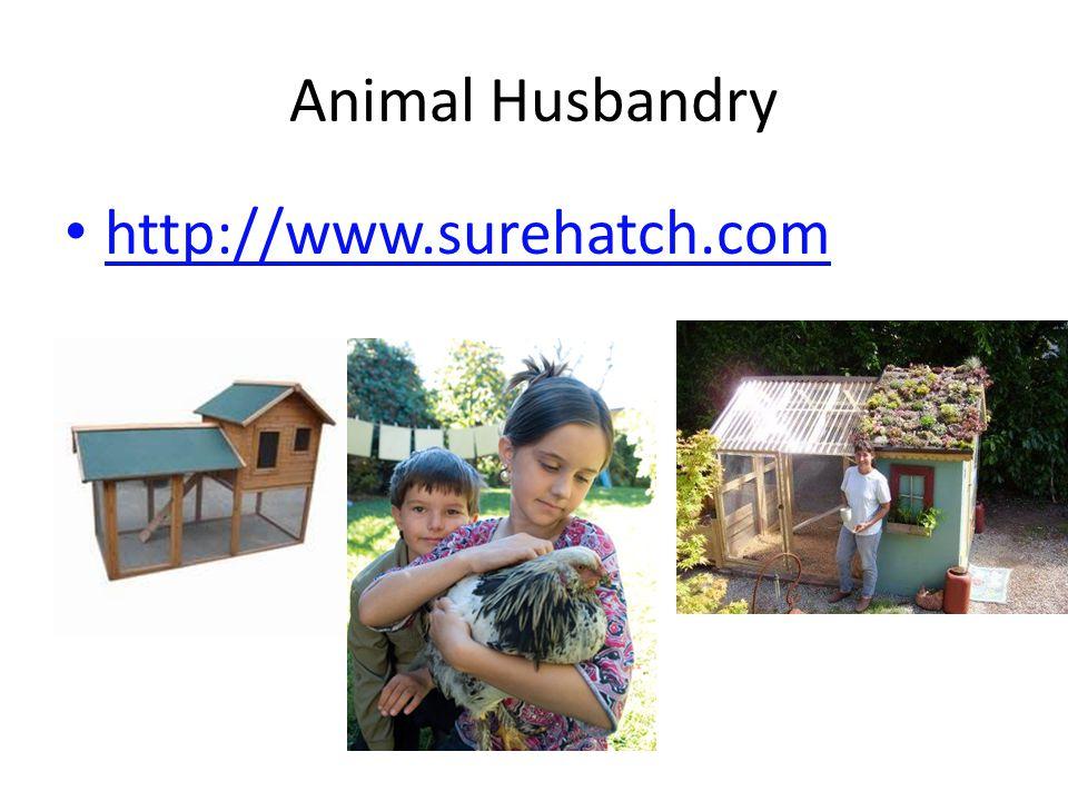 Animal Husbandry http://www.surehatch.com
