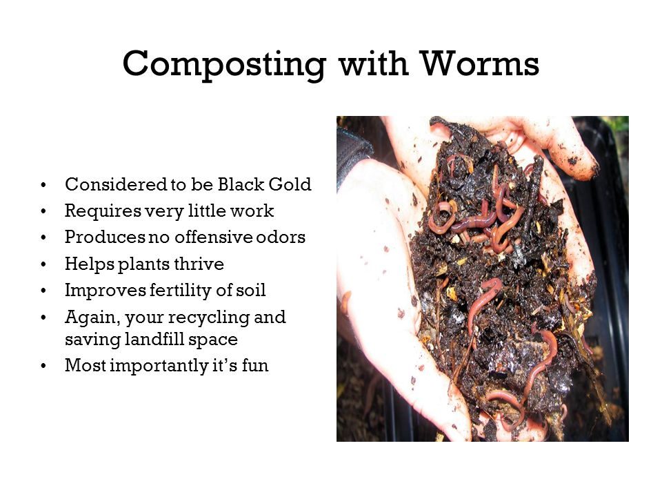 Composting with Worms Considered to be Black Gold Requires very little work Produces no offensive odors Helps plants thrive Improves fertility of soil