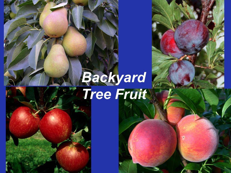 Backyard Tree Fruit