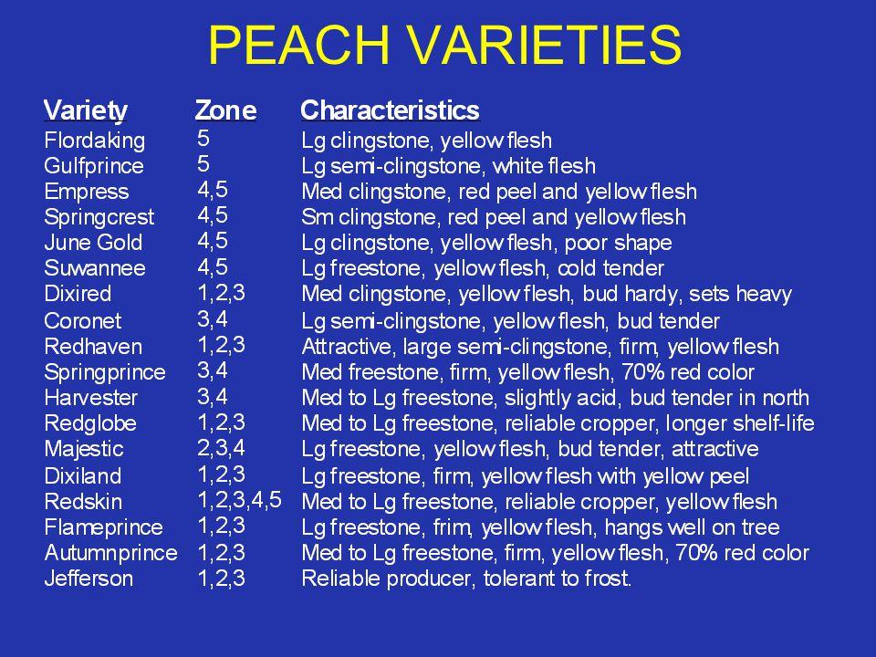 PEACH VARIETIES