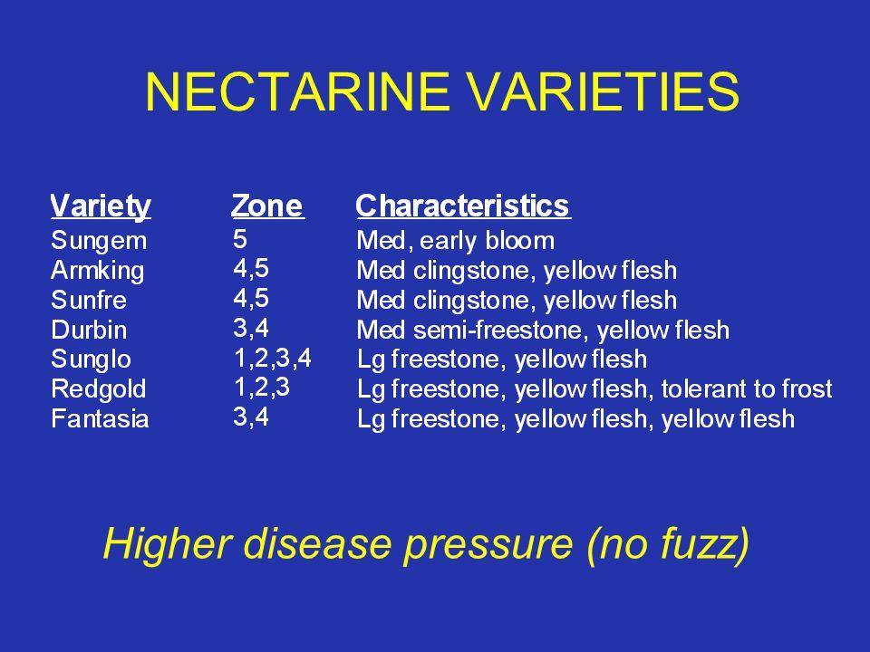 NECTARINE VARIETIES Higher disease pressure (no fuzz)