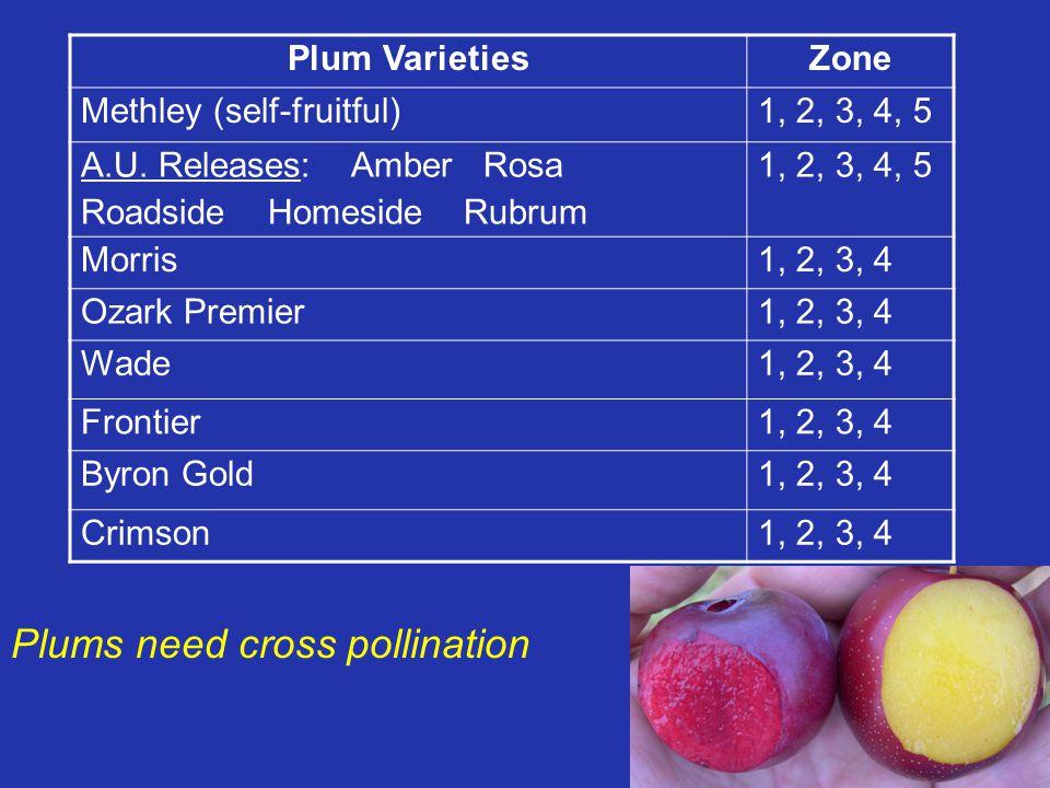 Plum VarietiesZone Methley (self-fruitful)1, 2, 3, 4, 5 A.U. Releases: Amber Rosa Roadside Homeside Rubrum 1, 2, 3, 4, 5 Morris1, 2, 3, 4 Ozark Premie