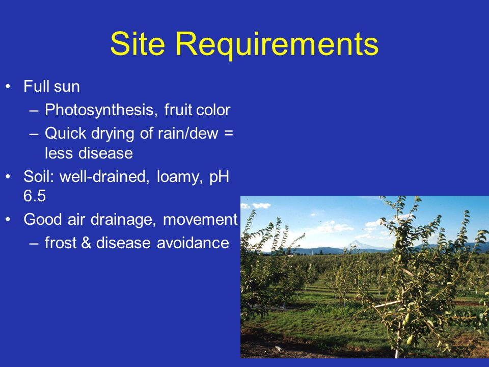 Site Requirements Full sun –Photosynthesis, fruit color –Quick drying of rain/dew = less disease Soil: well-drained, loamy, pH 6.5 Good air drainage,
