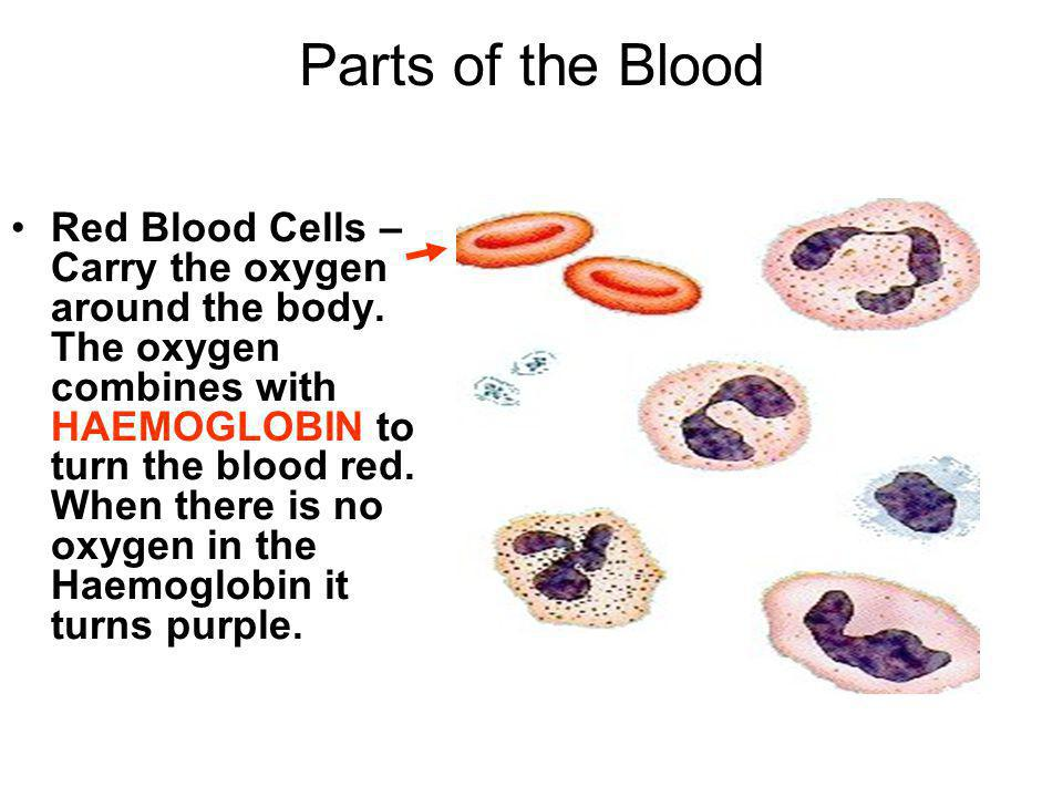 Parts of the Blood Plasma – This is the name for the liquid that all the cells float in.