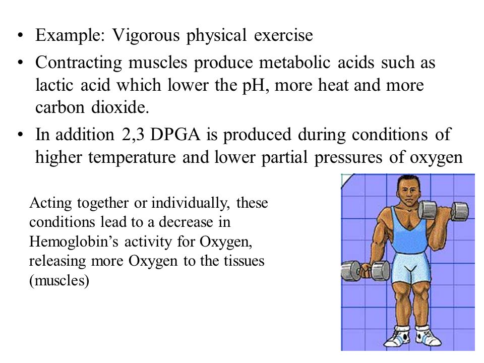 Example: Vigorous physical exercise Contracting muscles produce metabolic acids such as lactic acid which lower the pH, more heat and more carbon dioxide.
