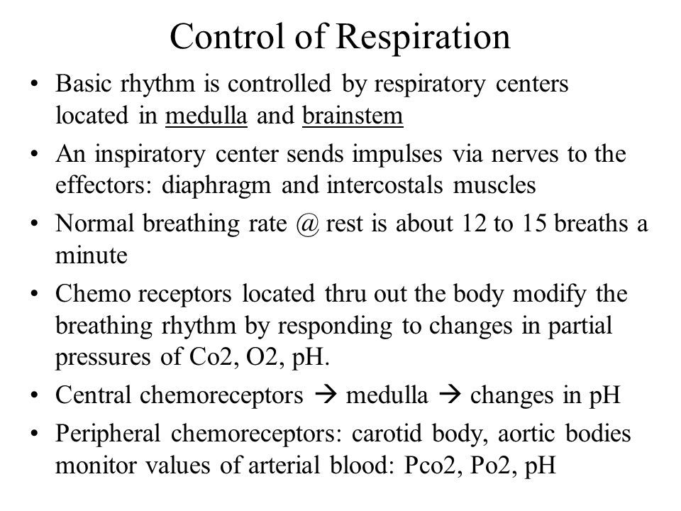 Control of Respiration Basic rhythm is controlled by respiratory centers located in medulla and brainstem An inspiratory center sends impulses via nerves to the effectors: diaphragm and intercostals muscles Normal breathing rate @ rest is about 12 to 15 breaths a minute Chemo receptors located thru out the body modify the breathing rhythm by responding to changes in partial pressures of Co2, O2, pH.