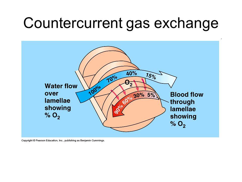 Countercurrent gas exchange
