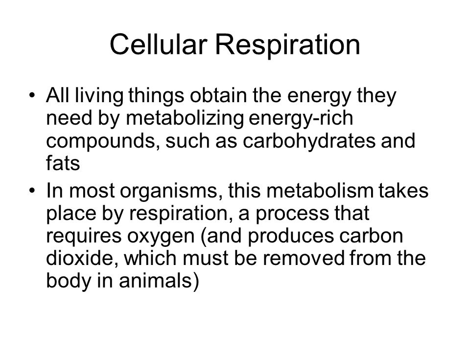 Cellular Respiration Cellular respiration is the process by which animals and other organisms obtain the energy available in carbohydrates Cells take the carbohydrates into their cytoplasm where, through a series of metabolic reactions, it is broken down into ATP –O 2 is the oxidizing agent (electron acceptor) in plants and animals (aerobic) –Bacteria and Archaea use inorganic molecules such as sulfur, methane, iron, and metal ions (anaerobic)