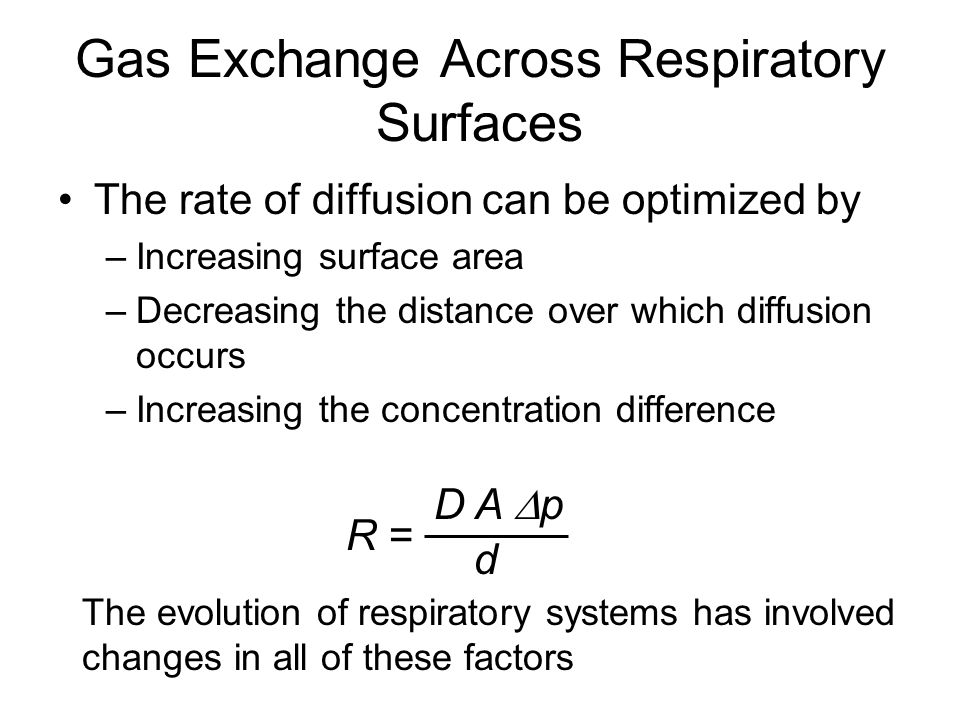 Gas Exchange Across Respiratory Surfaces The rate of diffusion can be optimized by –Increasing surface area –Decreasing the distance over which diffus