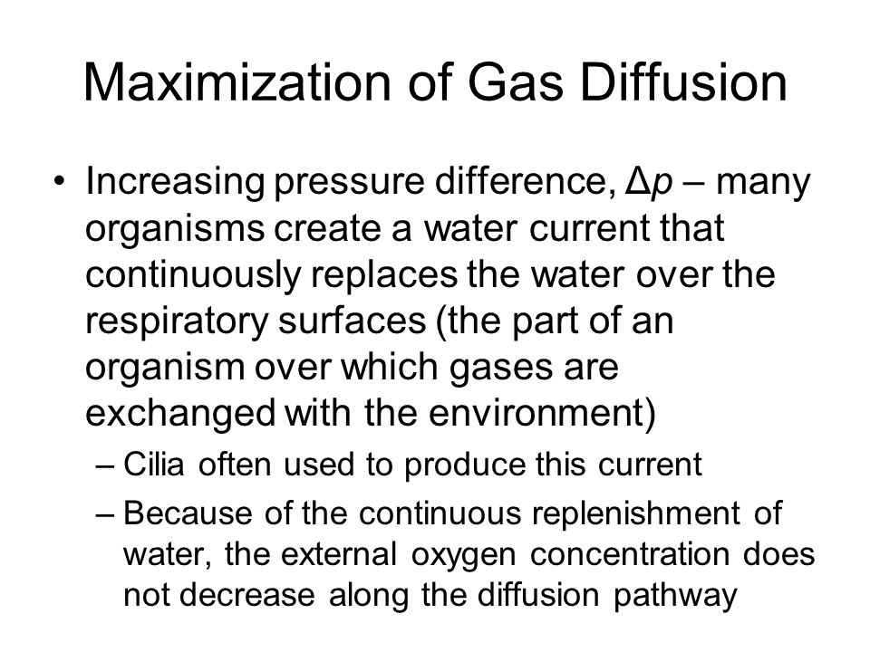 Maximization of Gas Diffusion Increasing pressure difference, Δp – many organisms create a water current that continuously replaces the water over the