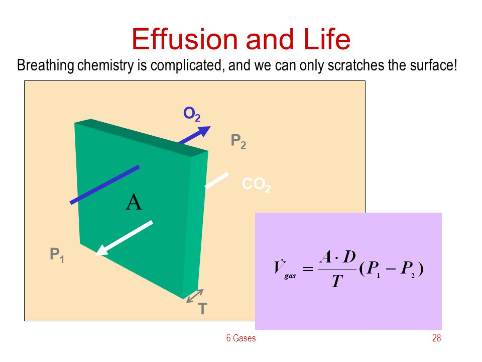 6 Gases28 Effusion and Life O2O2 CO 2 T P1P1 P2P2 A Breathing chemistry is complicated, and we can only scratches the surface!