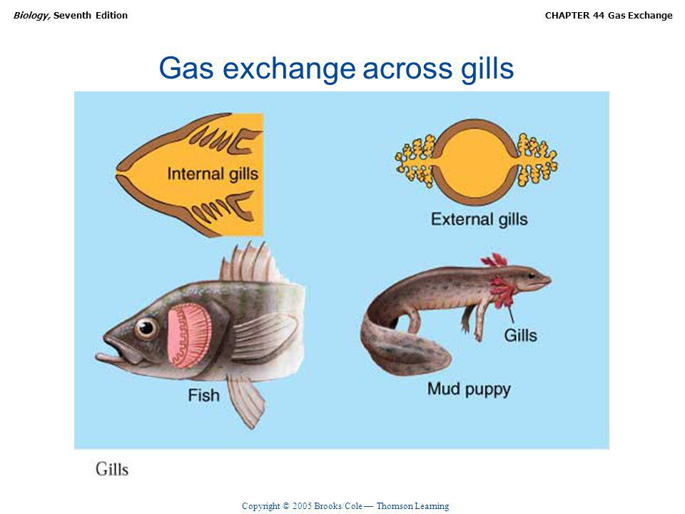 Copyright © 2005 Brooks/Cole Thomson Learning Biology, Seventh EditionCHAPTER 44 Gas Exchange Gas exchange across gills