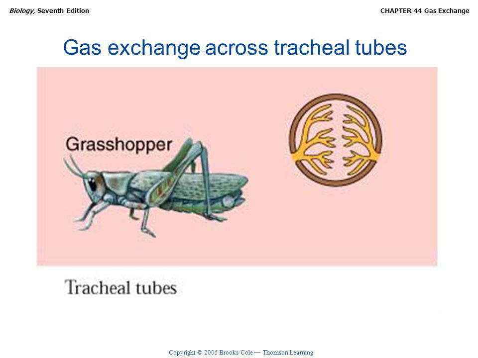 Copyright © 2005 Brooks/Cole Thomson Learning Biology, Seventh EditionCHAPTER 44 Gas Exchange Mechanics of breathing