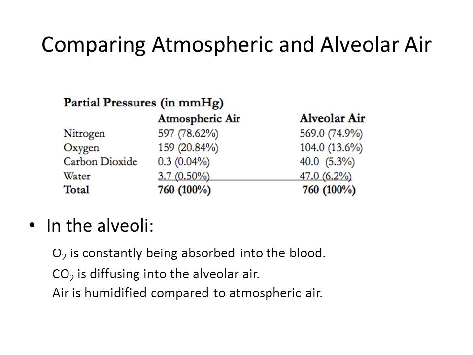 Comparing Atmospheric and Alveolar Air In the alveoli: O 2 is constantly being absorbed into the blood.