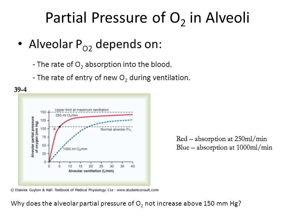 Partial Pressure of O 2 in Alveoli Alveolar P O2 depends on: - The rate of O 2 absorption into the blood.