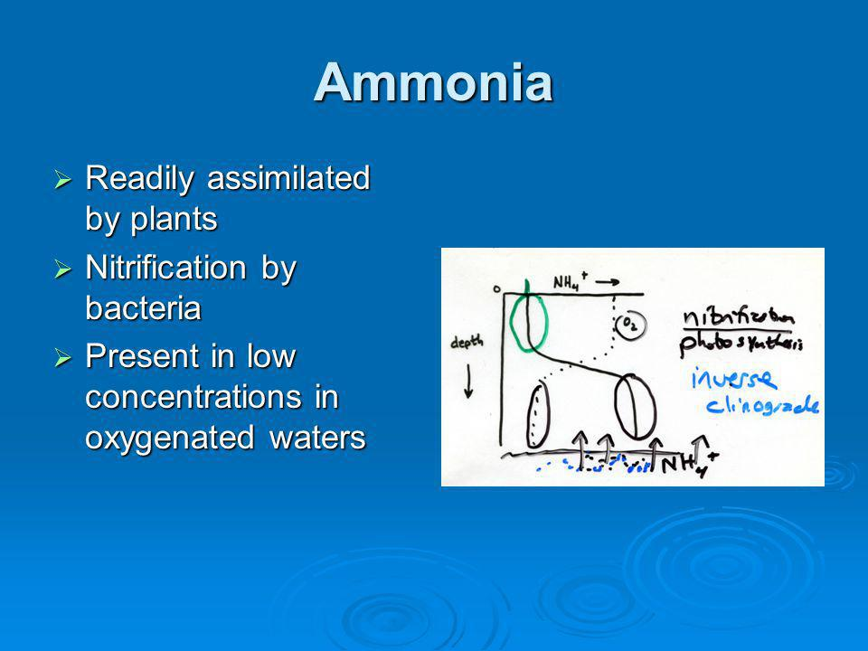 Ammonia Readily assimilated by plants Readily assimilated by plants Nitrification by bacteria Nitrification by bacteria Present in low concentrations in oxygenated waters Present in low concentrations in oxygenated waters