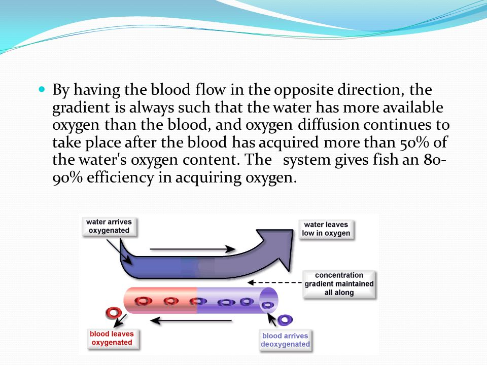 By having the blood flow in the opposite direction, the gradient is always such that the water has more available oxygen than the blood, and oxygen di