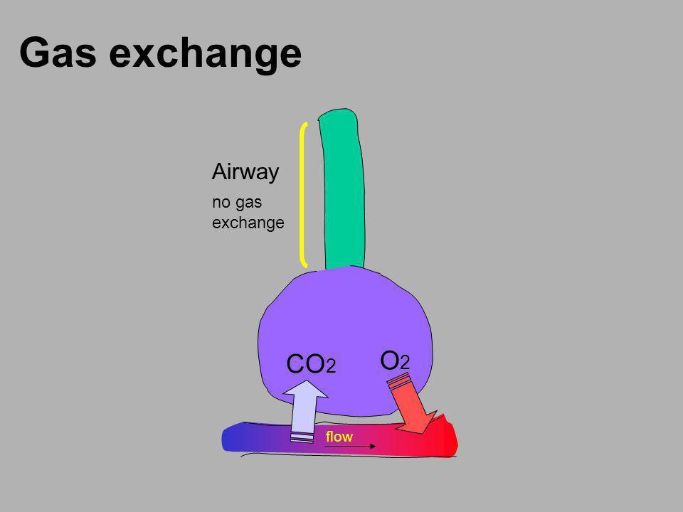 Gas exchange Airway flow CO 2 O2O2 no gas exchange
