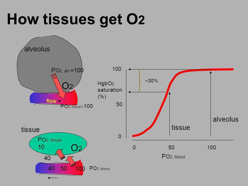 How tissues get O 2 flow O2O2 P O 2, alv = 100 alveolus O2O2 P O 2, tissue 10 P O 2, blood = 100 P O 2, blood 40 100 4050 tissue alveolus tissue 0 50