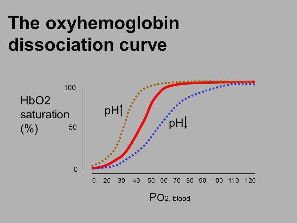 The oxyhemoglobin dissociation curve 0 20 30 40 50 60 70 80 90 100 110 120 100 50 0 P O 2, blood HbO2 saturation (%) pH