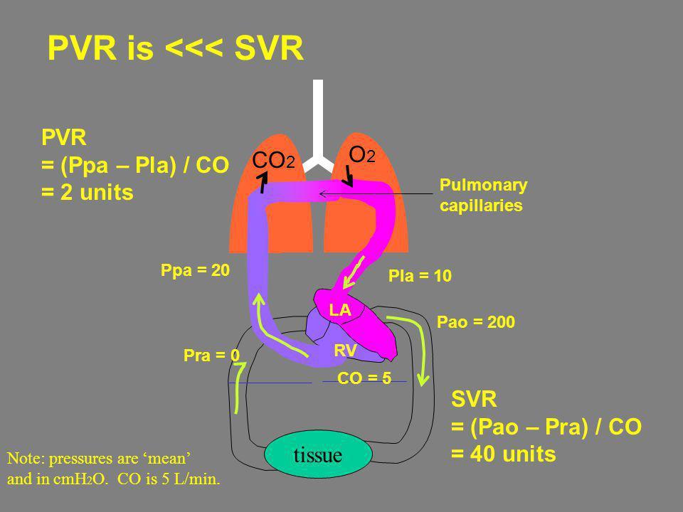 PVR = (Ppa – Pla) / CO = 2 units tissue CO 2 O2O2 Ppa = 20 RV LA Pulmonary capillaries Note: pressures are mean and in cmH 2 O. CO is 5 L/min. Pla = 1