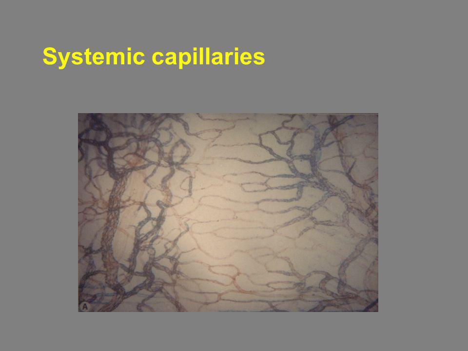 Systemic capillaries