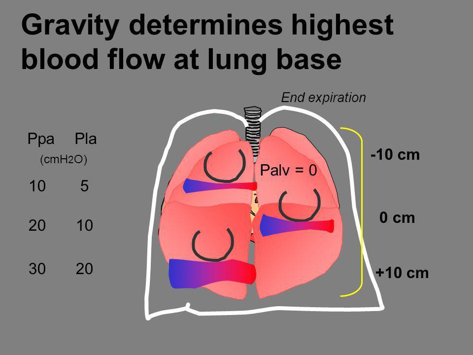 Gravity determines highest blood flow at lung base 0 cm End expiration +10 cm -10 cm PpaPla (cmH 2 O) 10 5 2010 3020 Palv = 0
