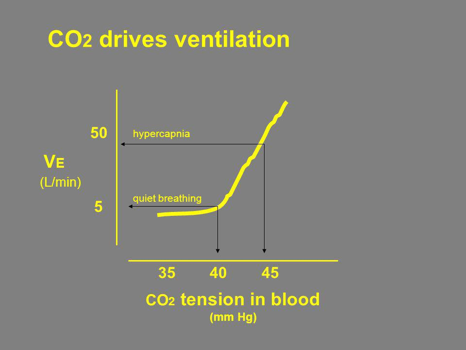 CO 2 tension in blood (mm Hg) 35 40 45 VEVE 5 50 (L/min) quiet breathing hypercapnia CO 2 drives ventilation