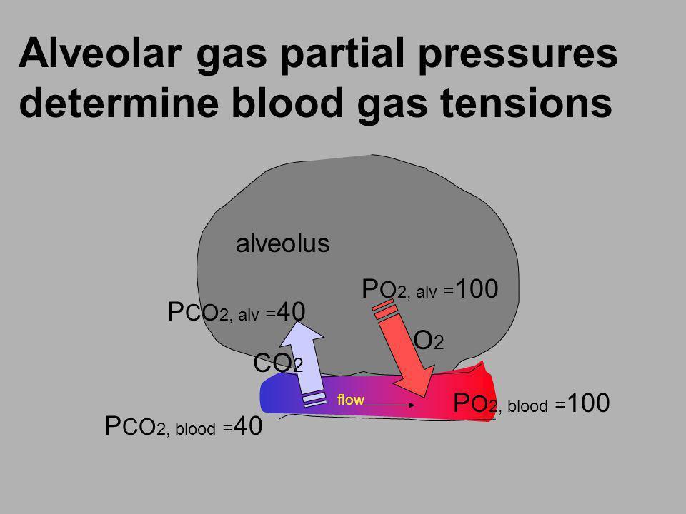 Alveolar gas partial pressures determine blood gas tensions flow CO 2 O2O2 P CO 2, blood = 40 P CO 2, alv = 40 P O 2, alv = 100 P O 2, blood = 100 alv