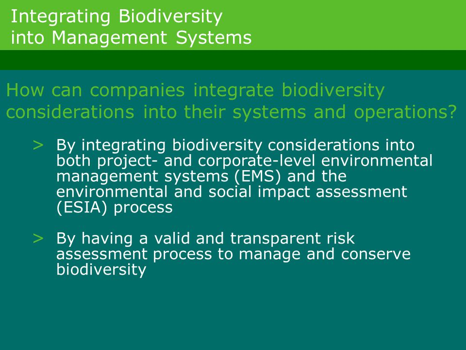 How can companies integrate biodiversity considerations into their systems and operations? > By integrating biodiversity considerations into both proj