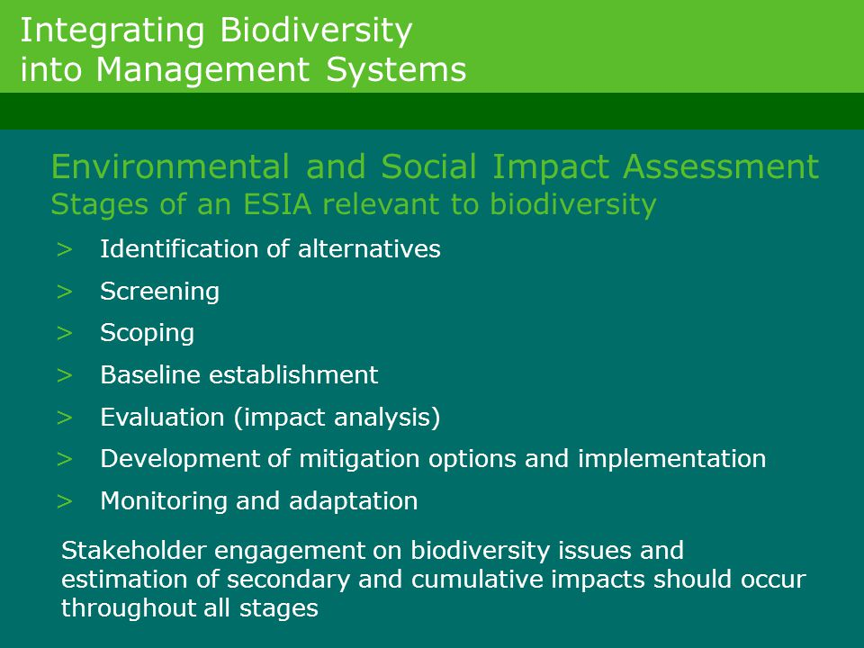 > Identification of alternatives > Screening > Scoping > Baseline establishment > Evaluation (impact analysis) > Development of mitigation options and