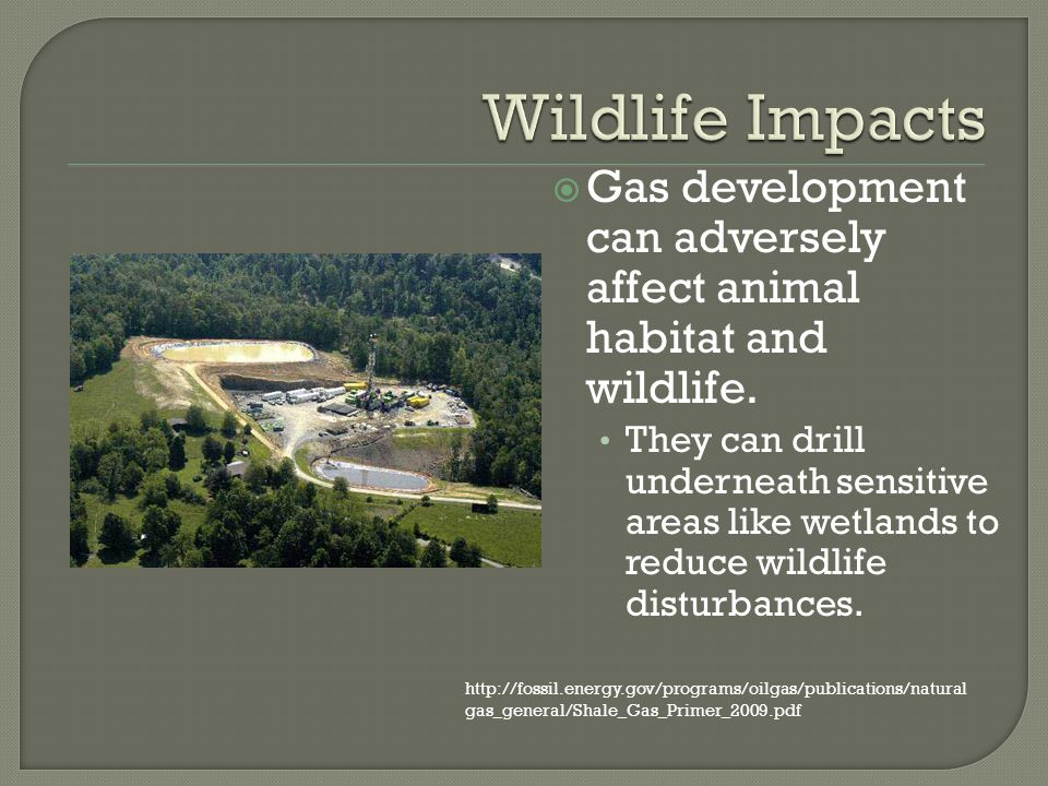 Gas development can adversely affect animal habitat and wildlife.
