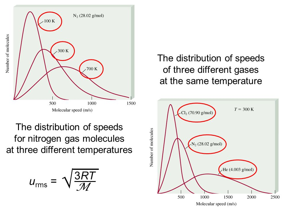 The distribution of speeds for nitrogen gas molecules at three different temperatures The distribution of speeds of three different gases at the same temperature u rms = 3RT M