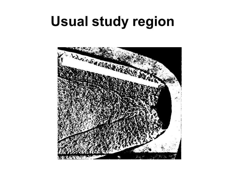 Usual study region